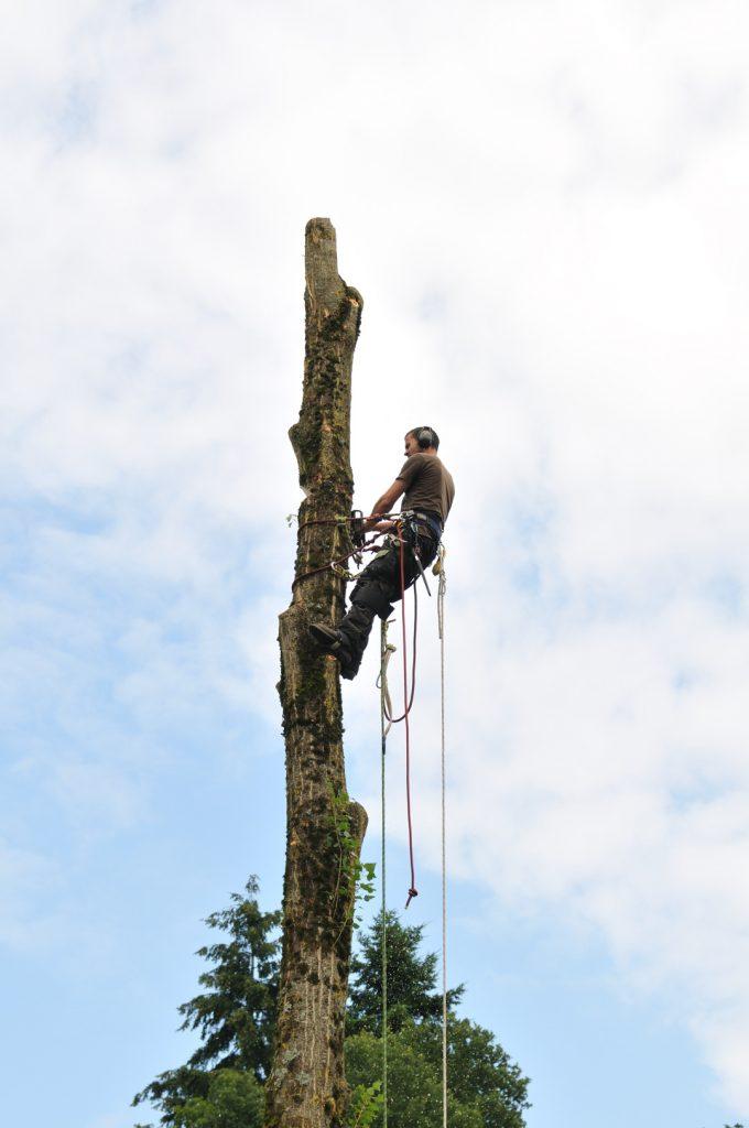 Un élagueur attaché en haut d'un tronc d'arbre effectue une coupe sur celui-ci à l'aide d'une tronçonneuse.