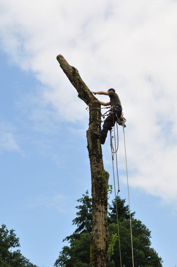 Démontage d'arbre au Gué Jouan